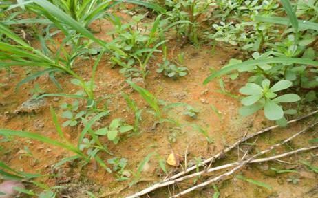 酸性土壤有什么危害