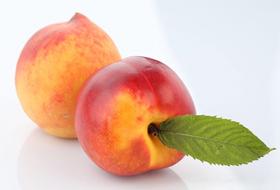 桃树防治历