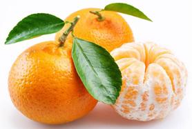 柑橘防治历