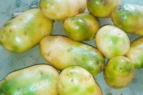 绿皮马铃薯
