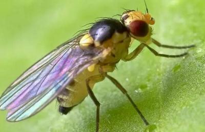 高效防治斑潜蝇,不得不跟您讲道理