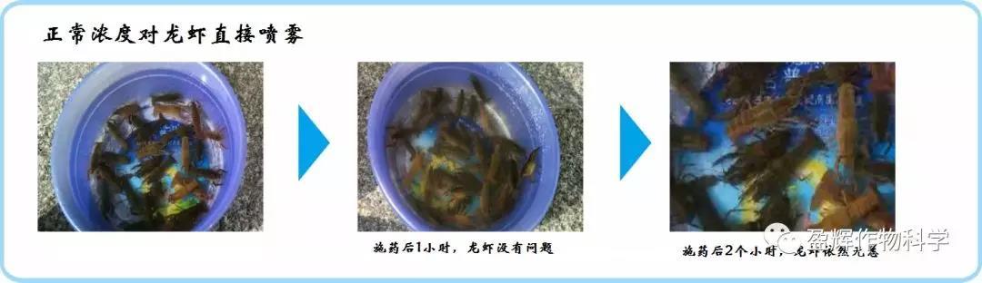 """虾稻田用""""沙卷"""",助力虾稻双丰收"""