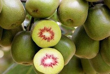 生物菌防治猕猴桃根结线虫