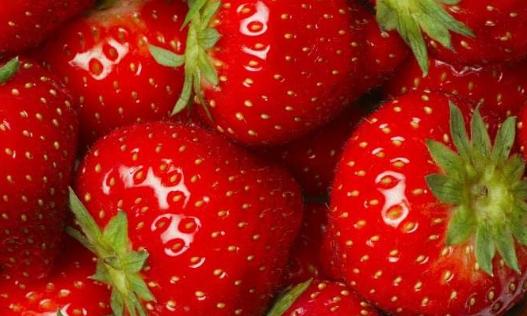 摘草莓的季节选择