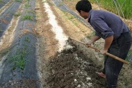 土壤改良从这几方面入手