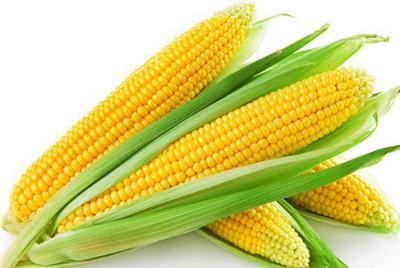 玉米防治历